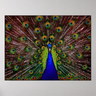 Impresión del poster del pavo real