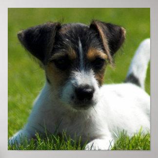Impresión del poster del perrito de Jack Russell