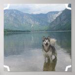 Impresión del poster del perro del Malamute