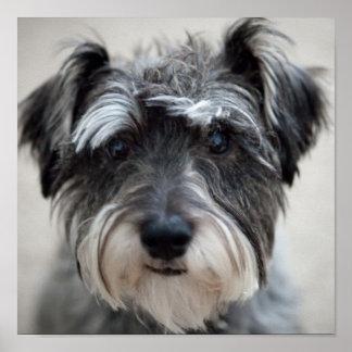 Impresión del poster del perro del Schnauzer