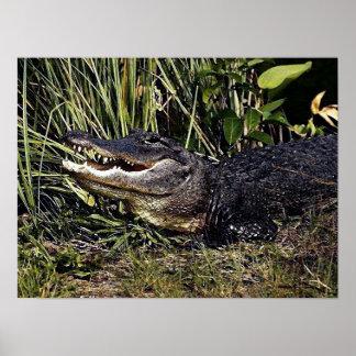 Impresión del poster del retrato del cocodrilo