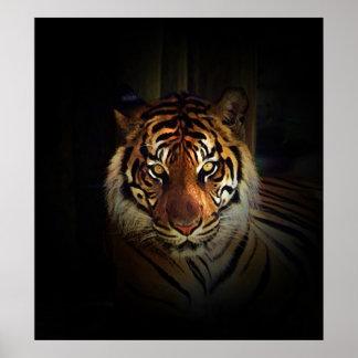Impresión del poster del tigre de Sumatran