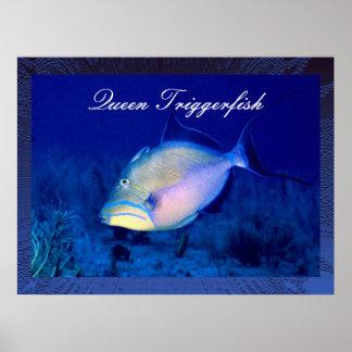 Impresión del poster del Triggerfish de reina