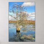 Impresión del poster: Dos árboles como uno