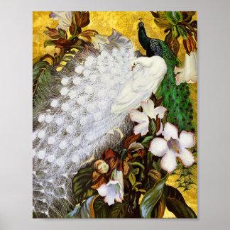 Impresión del poster: Pavos reales blancos y azule