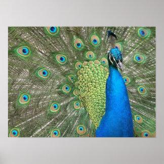 Impresión del puntal del pavo real impresiones