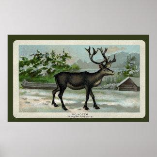 Impresión del reno del vintage