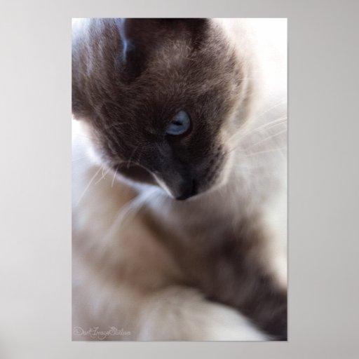 Impresión del retrato 1 del gato posters