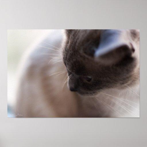 Impresión del retrato 3 del gato impresiones