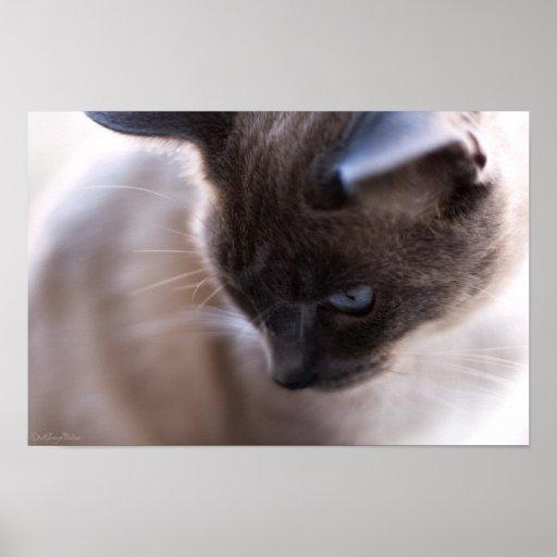 Impresión del retrato 4 del gato poster