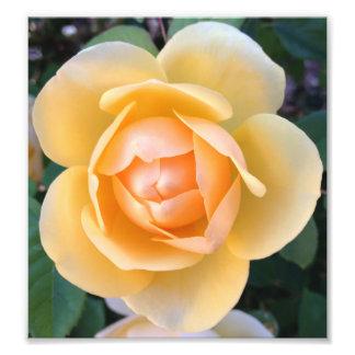Impresión del rosa amarillo fotografía