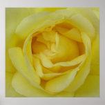 impresión del rosa amarillo impresiones