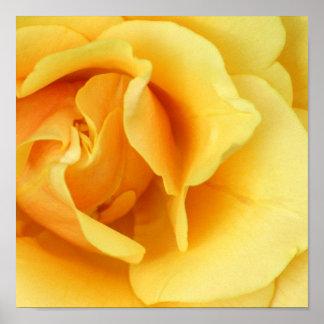 Impresión del rosa amarillo poster