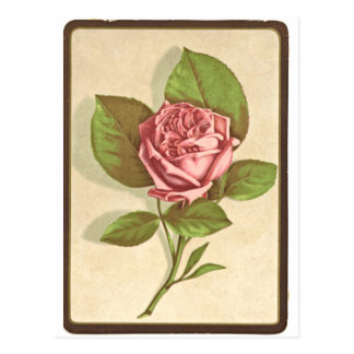 Impresión del rosa del vintage postal