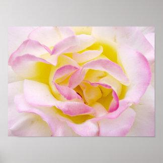 Impresión del rosa poster