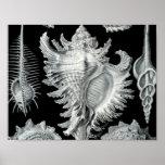 Impresión del Seashell del vintage Impresiones