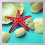 impresión del seashell impresiones