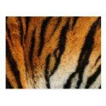 Impresión del tigre postales