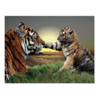 Impresión del tigre y de la edición de Cub Digital Fotografías