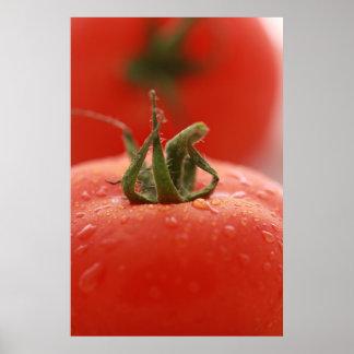 Impresión del tomate póster