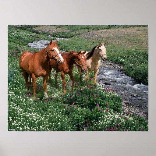 Impresión del trío del caballo impresiones