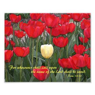 Impresión del verso 8x10 de la biblia del tulipán fotografía