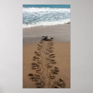 Impresión del viaje de la tortuga de Hawksbill Póster