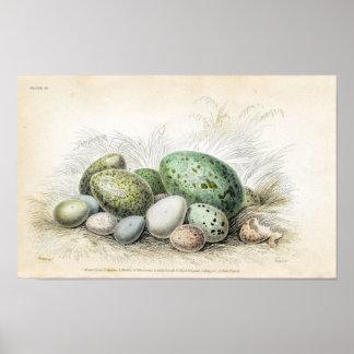 Impresión del Victorian de los diversos huevos de Poster
