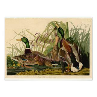 Impresión del vintage del pájaro del pato del pato anuncio
