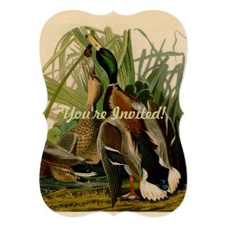 Impresión del vintage del pájaro del pato del pato anuncio personalizado