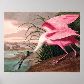 Impresión del vintage del pájaro del Spoonbill Impresiones