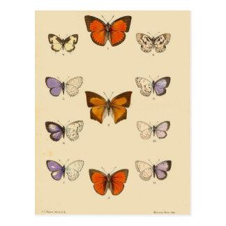 Impresión del vintage - nuevos lepidópteros indios tarjetas postales