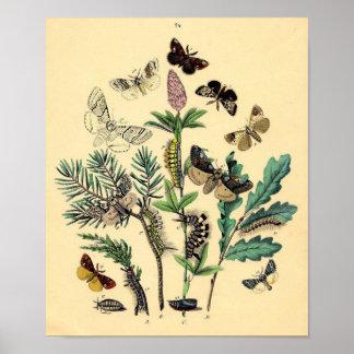 Impresión del vintage - polillas y mariposas impresiones
