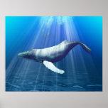 Impresión del Watercolour de la ballena jorobada Impresiones