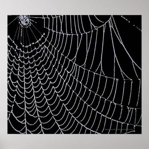 Impresión del Web de araña el   Póster