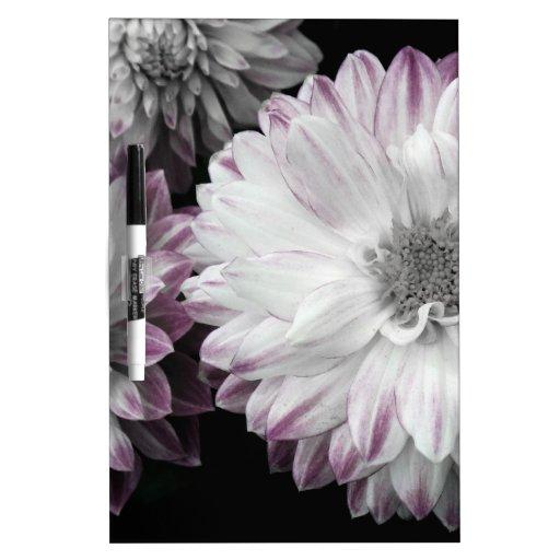 Impresión descolorada hermosa de la dalia pizarra blanca