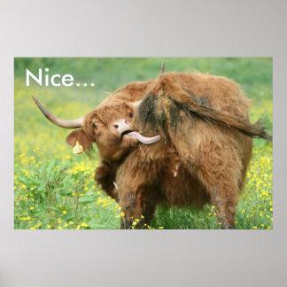Impresión divertida del poster de la vaca de Aberd