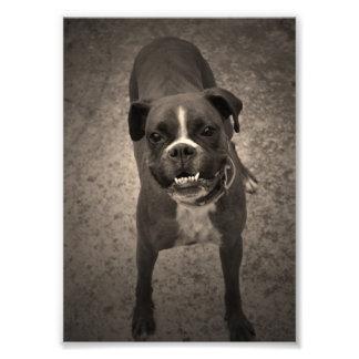 Impresión divertida linda de la foto del perro del