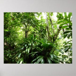 Impresión dominicana del poster de la selva tropic