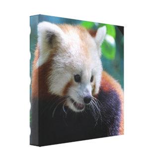Impresión dulce de la lona de la panda roja impresion en lona
