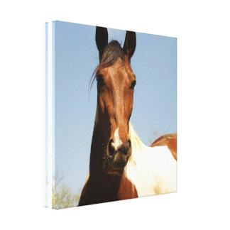 Impresión dulce de la lona del caballo de la pintu lona estirada galerías