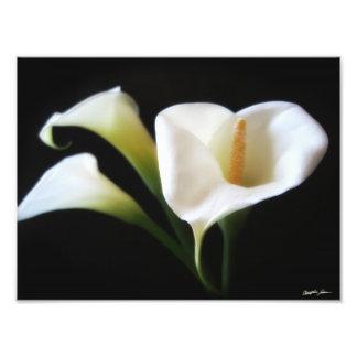 Impresión elegante de las flores 9 de la cala fotos