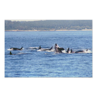 Impresión enmarcada Superpod de la orca Póster