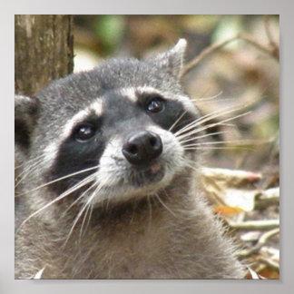 Impresión enmascarada del poster del mapache