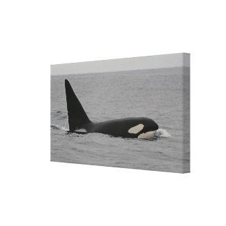 Impresión envuelta bahía de la lona de Monterey de