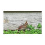 Impresión envuelta de la lona - cardenal juvenil impresión en lona estirada