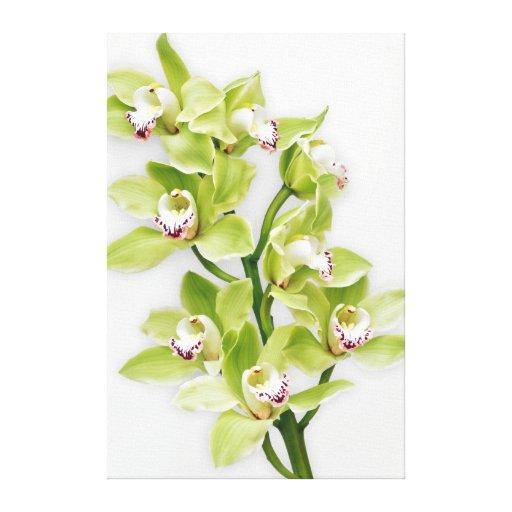 Impresión envuelta flor verde de la lona de la orq impresiones en lona