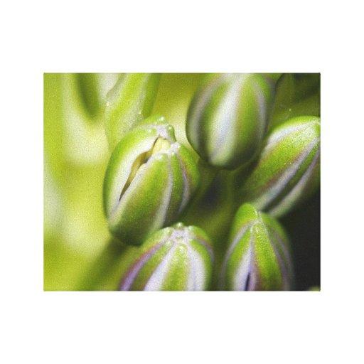 Impresión envuelta floral de la lona impresiones de lienzo