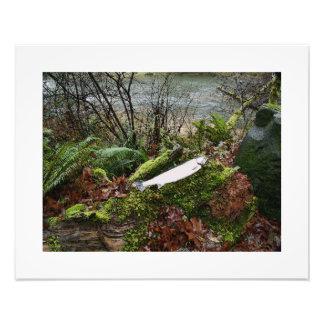 Impresión escénica de la fotografía de Oregon Cojinete