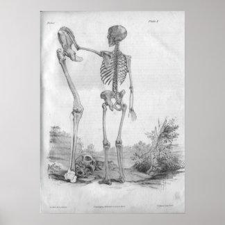 Impresión esquelética 1854 de la anatomía del vint poster